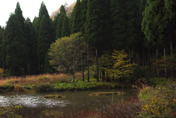 秋色の水辺