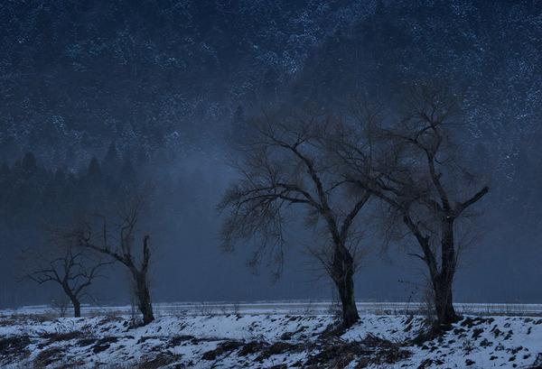余呉の老樹