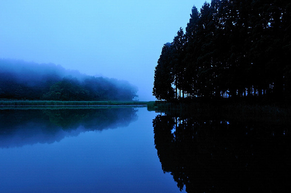 朝霧を望む