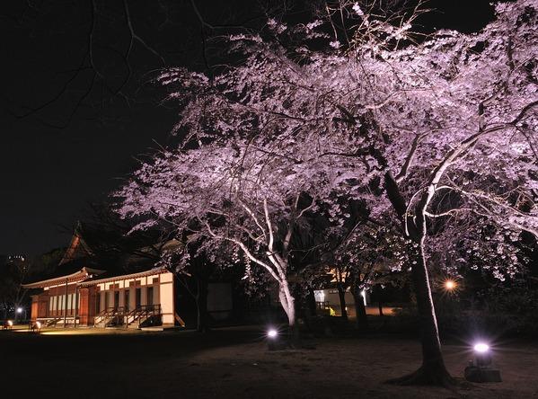 大阪迎賓館の桜