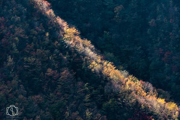 autumn line