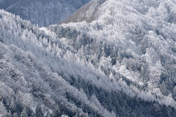 冬色の輝き