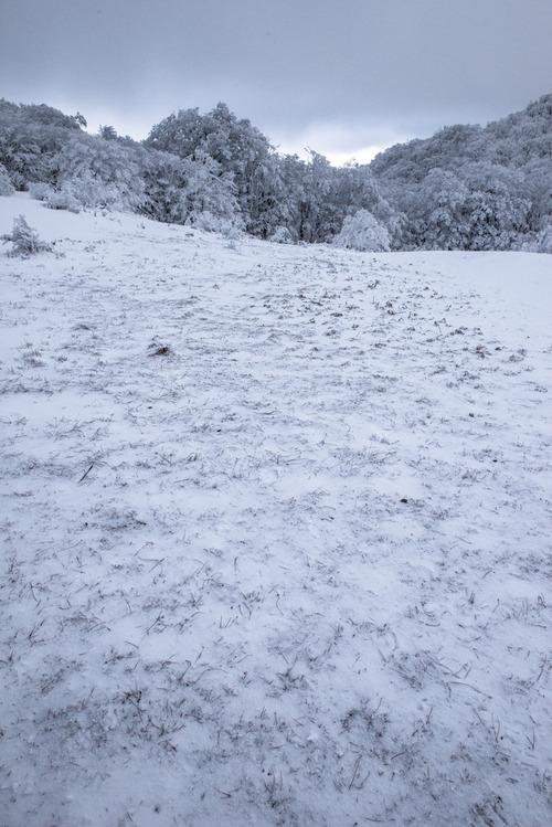 荒雪の標し