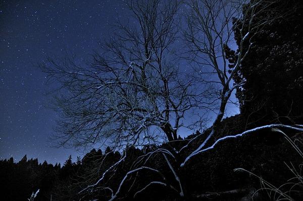 星の咲く木