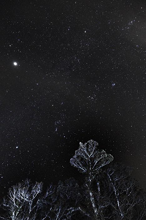 星が舞う夜