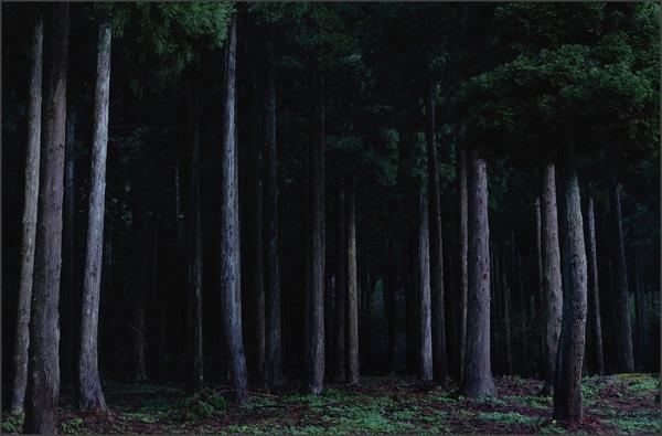 森への誘い