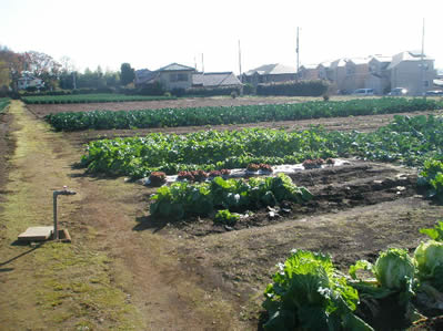 体験農業2