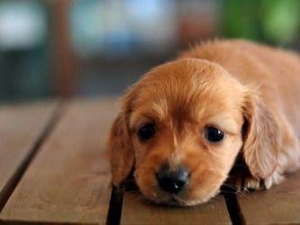 知人『犬を引き取って欲しい。処分するしかなくて…』見捨てる訳にはいかず、承諾すると、代金として30万円を請求されたのだが…