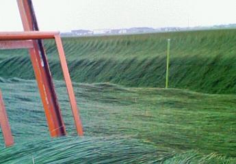 刈り取り作業2