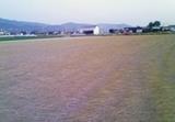 イグサ収穫後