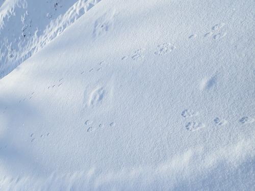 ウサギ (1)