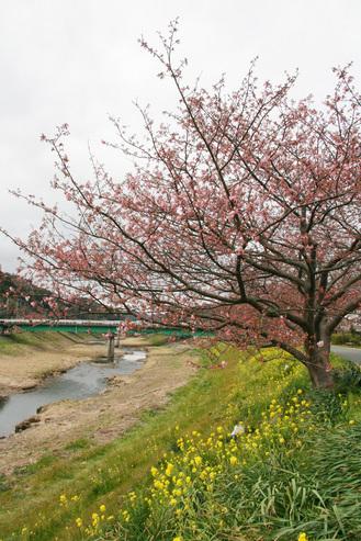 みなみ桜2