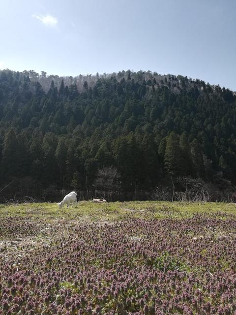 春の天ぷら皿