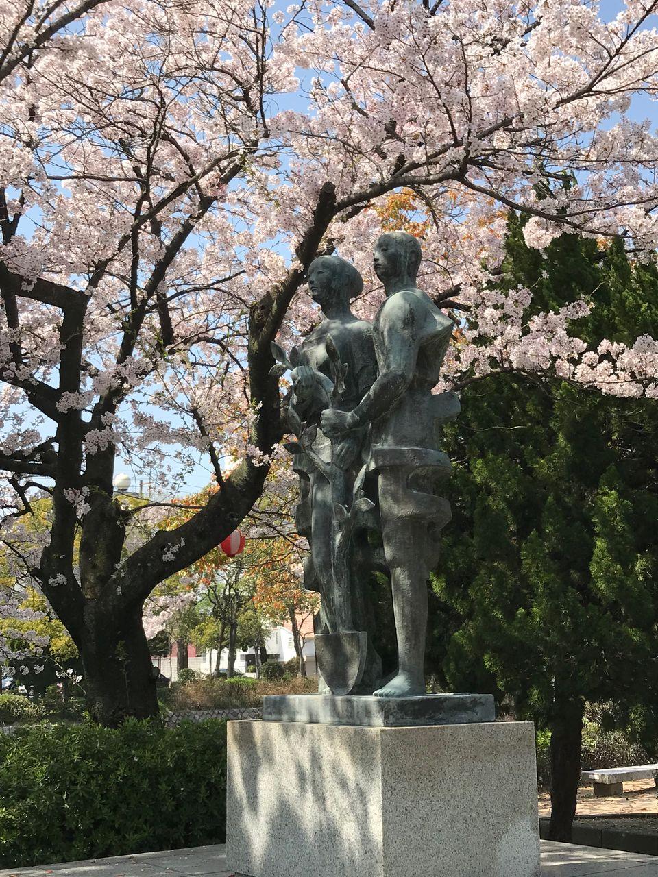 宇部税務署 周辺の桜