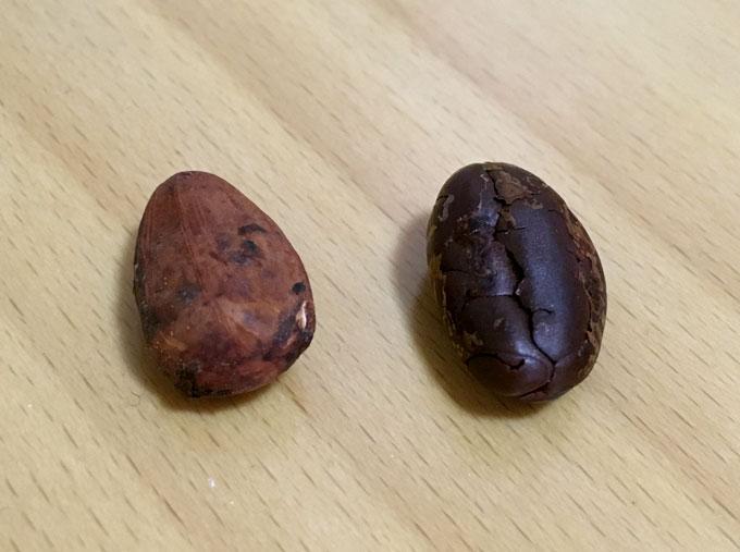 カカオ豆2