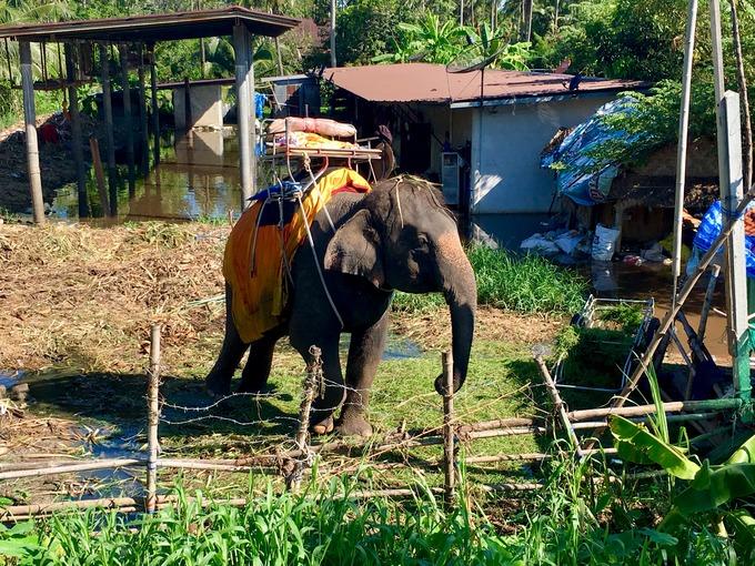 タイのゾウ