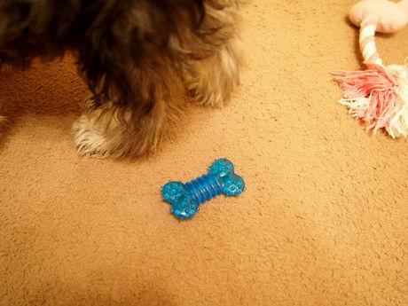 犬用歯固め
