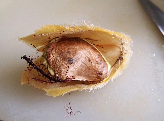キーツマンゴーの種の中身