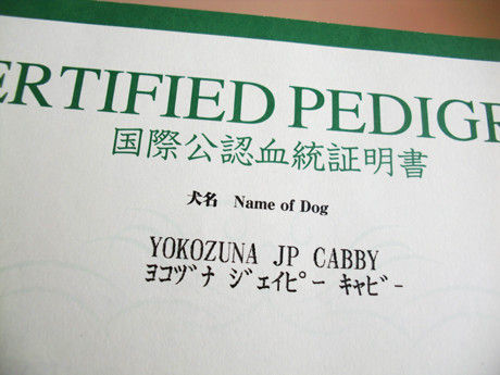 犬の血統書