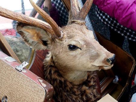 東京蚤の市 鹿の頭 剥製
