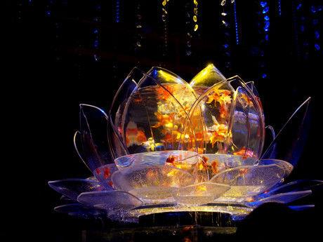 アートアクアリウム 蓮の花