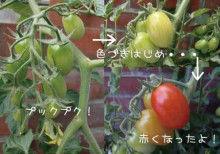 $ヒビノタネ-2010.6.19