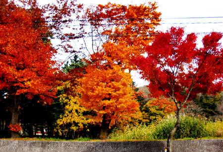 ヒビノタネ-紅葉