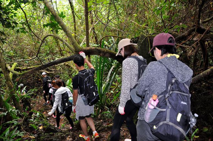 グアムのジャングル
