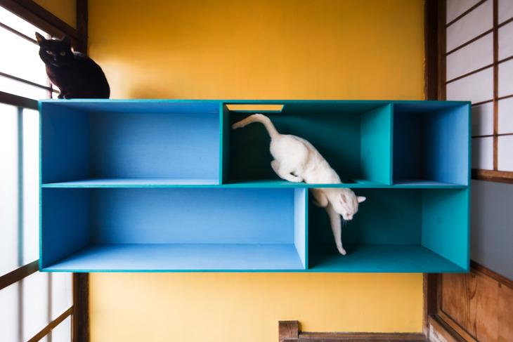 猫付き対応可物件