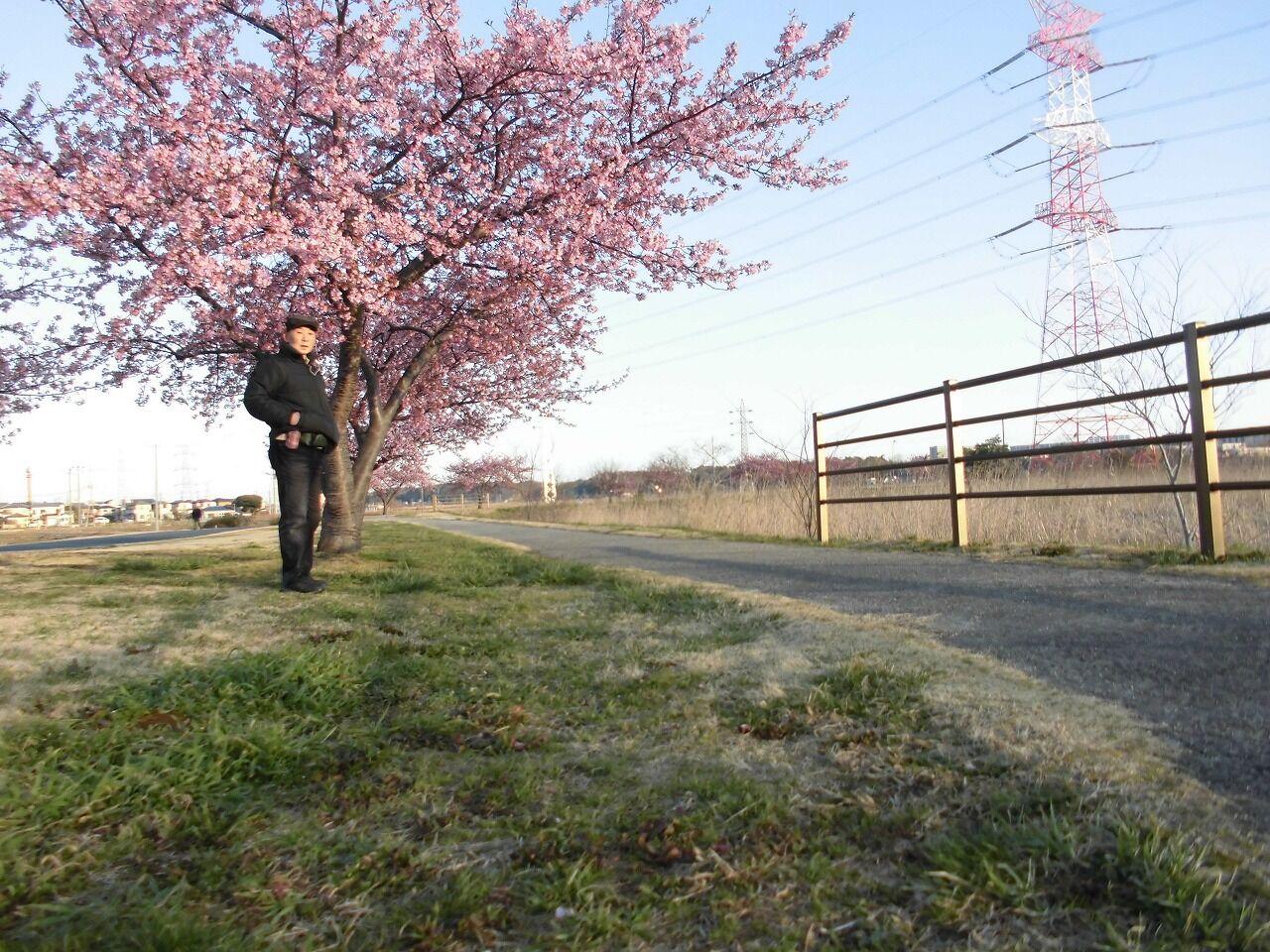 紀貫之 桜 見頃