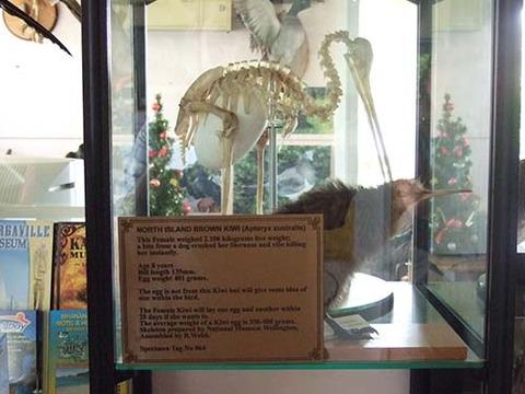 z2008_1218_1012_DSCF4947野鳥保護センター