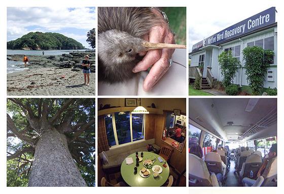 図版_NZコラージュ02_パイヒア