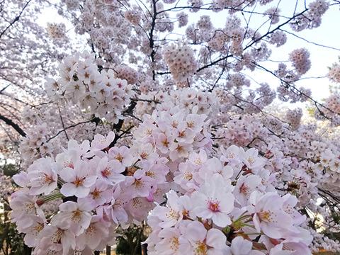 2015_0331_0646_DSC03015代々木公園 のコピー