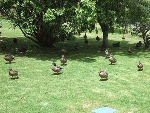 z2008_1218_1008_DSCF4942野鳥保護センター