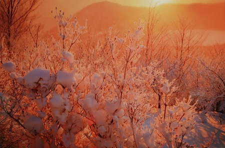 冬の赤木山by新野