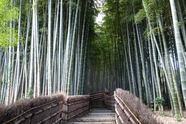 竹林の小径 化野念仏寺