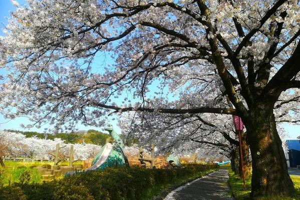 恐竜公園 桜3