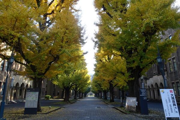 東京大学 並木
