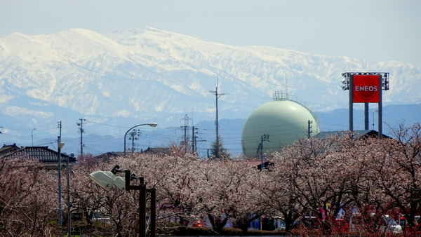 2018 春 桜と守門岳