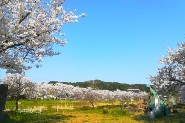 恐竜公園 桜2
