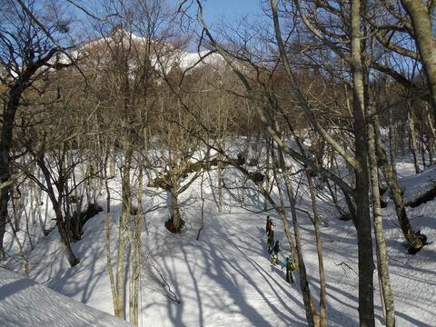 ぶなの林をてくてくIMGP0159