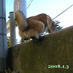 2008/1/3_1
