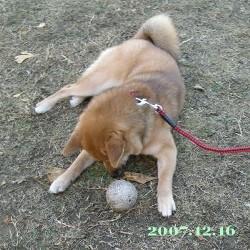 2007/12/17_1