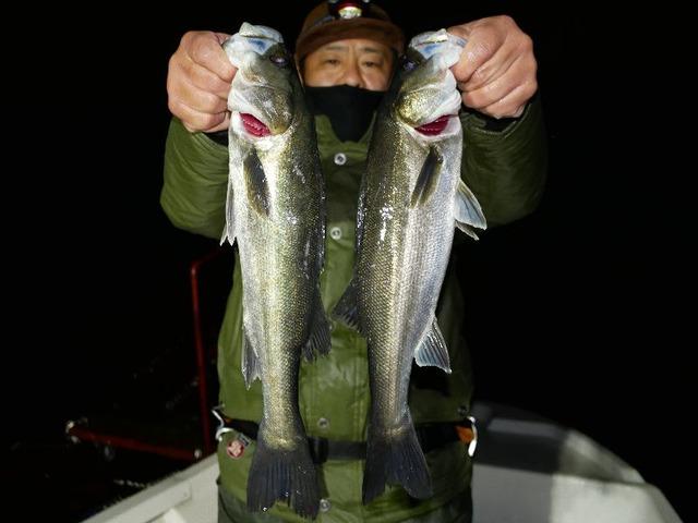 名古屋港 シーバス メバル 根魚