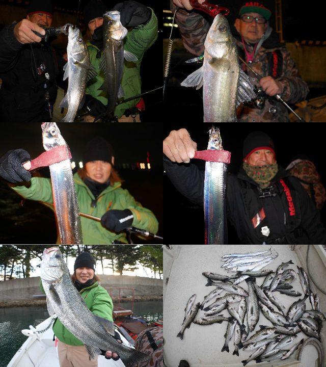 シーバス&タチウオ 釣果写真