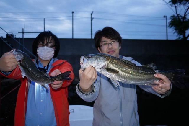 名古屋港 シーバス
