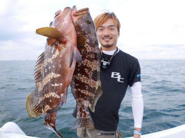 名古屋港 キジハタ