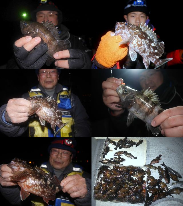 根魚&メバル 釣果写真