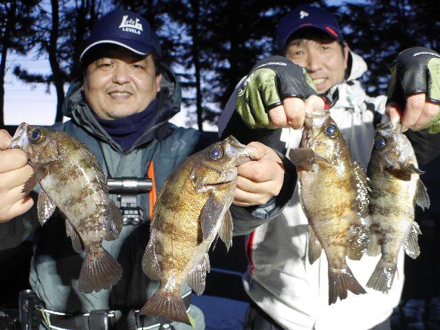 名古屋港 メバル 根魚