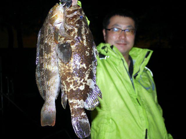 名古屋港 良型根魚